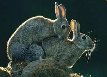 konijnenpreek